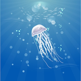 Piękne meduzy w oceanie