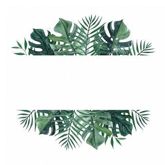 Piękne naturalne tło z monstera i liści palmowych