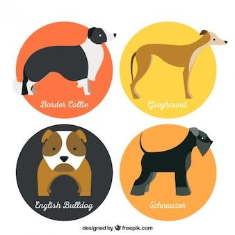 Piękne rasy psów