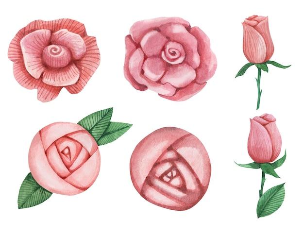 Piękne róże akwarela i piwonia w rozkwicie.