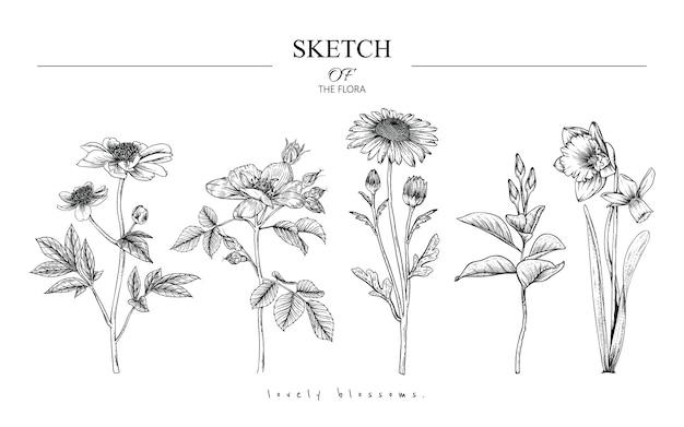 Piękne rysunki liści i kwiatów