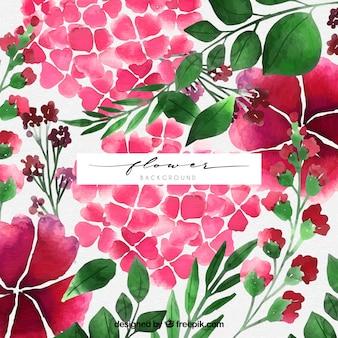 Piękne tło z kwiatami akwarela