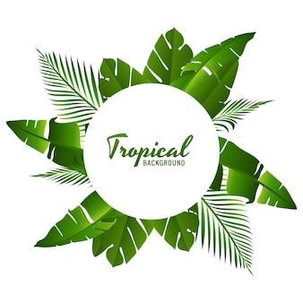 Piękne zielone liście tropikalne