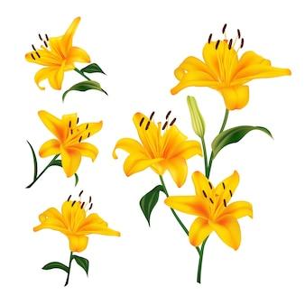 Piękne żółte kwiaty lilii. realistyczne elementy etykiet produktów kosmetycznych do pielęgnacji skóry. ilustracja