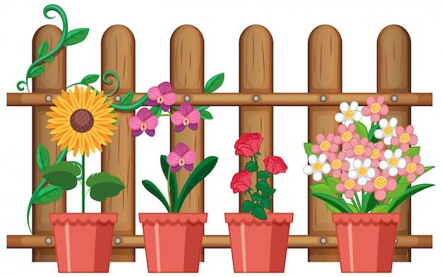 Piękni kwiaty w garnkach na białym tle