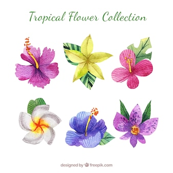 Piękny akwarela tropikalny kwiat collectio