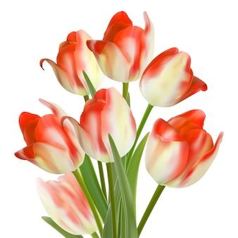 Piękny bukiet tulipanów na białym. eps10