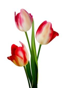 Piękny bukiet tulipanów na białym.