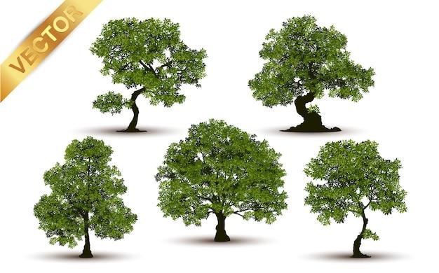 Piękny drzewo realistyczny na białym tle.