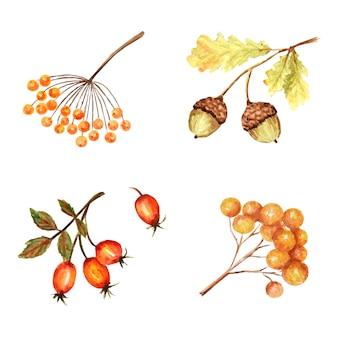 Piękny jasny jesienny liść sezonowy, żołądź natury, jesienny botaniczny.