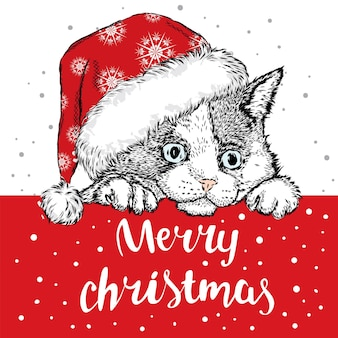 Piękny kotek w świątecznych ubraniach i noworocznych