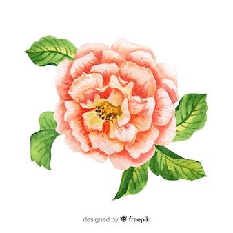 Piękny kwiat colar akwarela