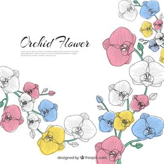 Piękny kwiat orchidei tle