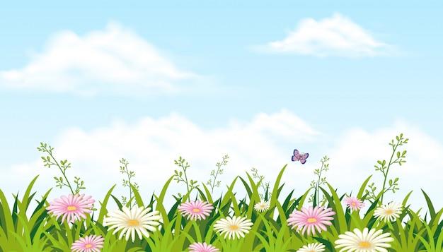 Piękny kwiat pole z motylem