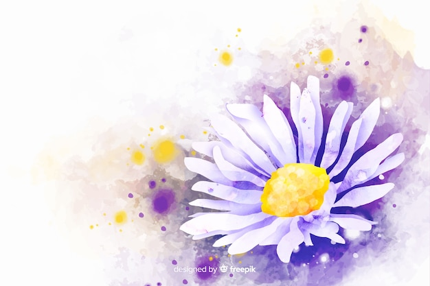 Piękny kwiat stokrotka akwarela tło