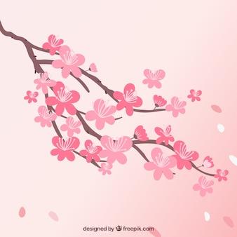 Piękny kwiat wiśni tło