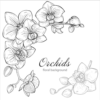 Piękny monochromatyczny kwiecisty tło z storczykowym kwiatem