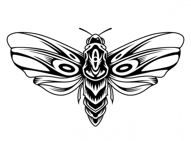 Piękny motyl vintage koncepcja