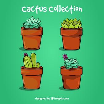 Piękny pakiet kolorowych kaktusów