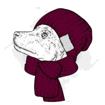 Piękny pies w czapce i szaliku
