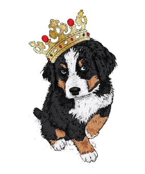 Piękny pies w koronie. berneński zenenhund.