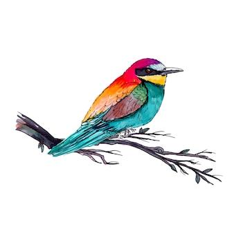 Piękny ptak akwarela