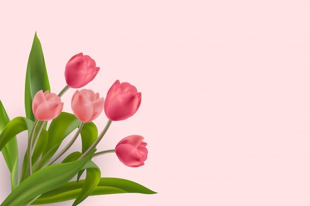 Piękny realistyczny czerwony i różowy kwiat tulipanów umieszczony na miękkim pastelowym tle.