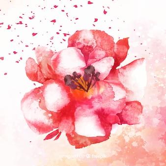 Piękny różowy cieniowany kwiat akwarela