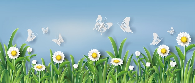 Piękny stokrotka kwitnie pole w parku