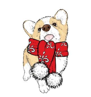 Piękny szczeniak w zimowym szaliku. nowy rok i boże narodzenie.
