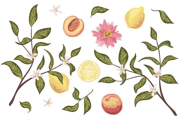 Piękny zestaw clipartów z brzoskwinią, cytryną, kwiatami i liśćmi. kolorowe ręcznie rysowane wektor. idealne na zaproszenia ślubne, kartki okolicznościowe, kosmetyki naturalne, grafiki, plakaty, opakowania i herbatę