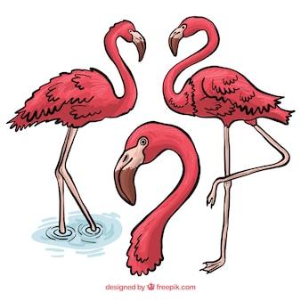 Piękny zestaw ręcznie rysowane flamingi