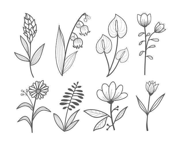 Pięknyzestaw różnych kolekcji kwiatów doodle