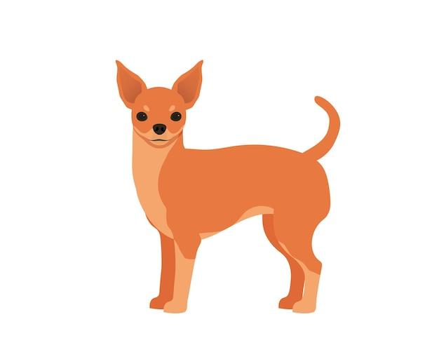 Pies chihuahua. wektor izolowany na białym tle