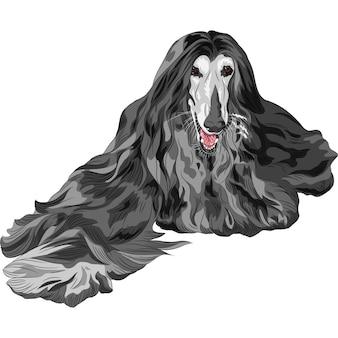 Pies domowy czarna rasa chart afgański