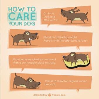 Pies infografika