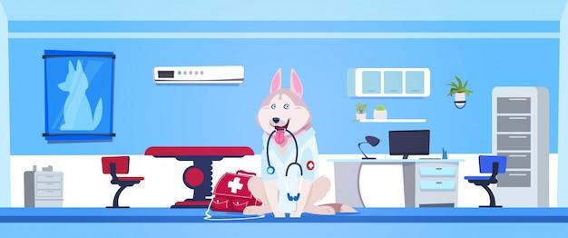 Pies jest ubranym białego żakieta i mienia stetoskop w weterynarz kliniki biura wnętrzu