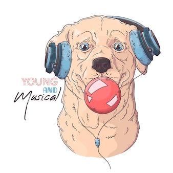 Pies labrador retriever nadyma gumę balonową