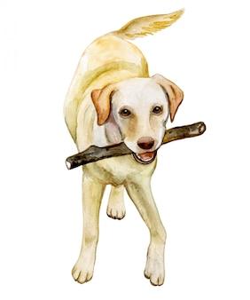 Pies labrador retriever w akwareli