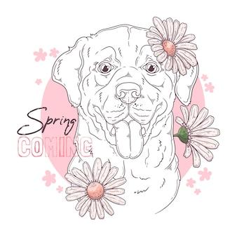 Pies labrador retriever z kwiatami