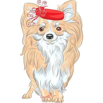 Pies mody rasy chihuahua uśmiecha się