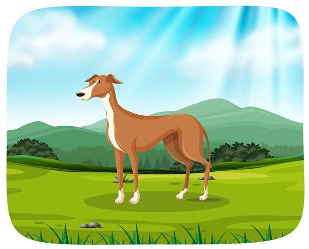 Pies na scenie przyrody