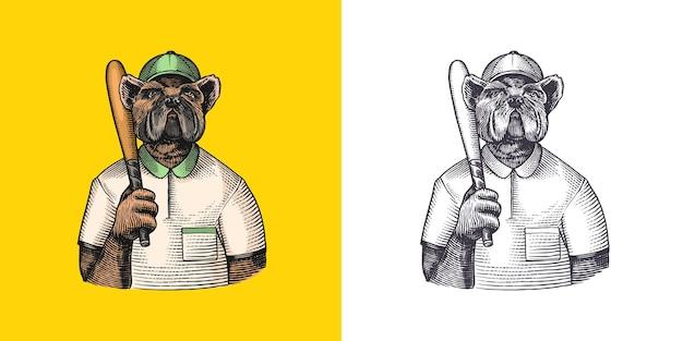 Pies postać buldoga baseballista z kijem modny zwierzęcy dżentelmen wiktoriański w kurtce