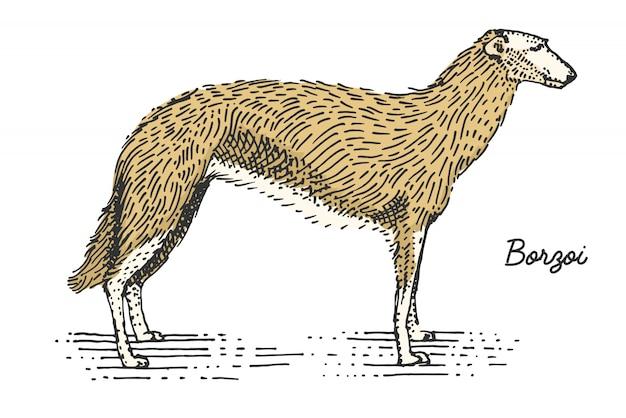 Pies rasy grawerowane, ręcznie rysowane ilustracja w stylu drzeworyt scratchboard, vintage gatunków.