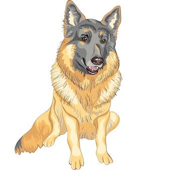 Pies rasy owczarek niemiecki uśmiech