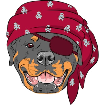 Pies rottweiler pirate