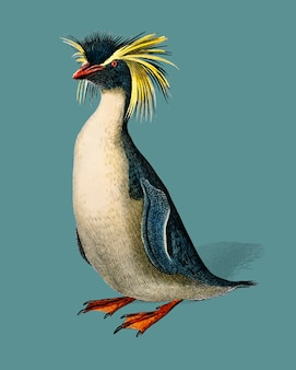 Pingwin górski (eudyptes chrysocome) zilustrowany przez charlesa dessalines d'orbigny (1806-1876).