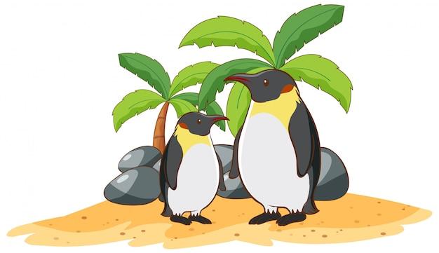 Pingwiny na białym tle