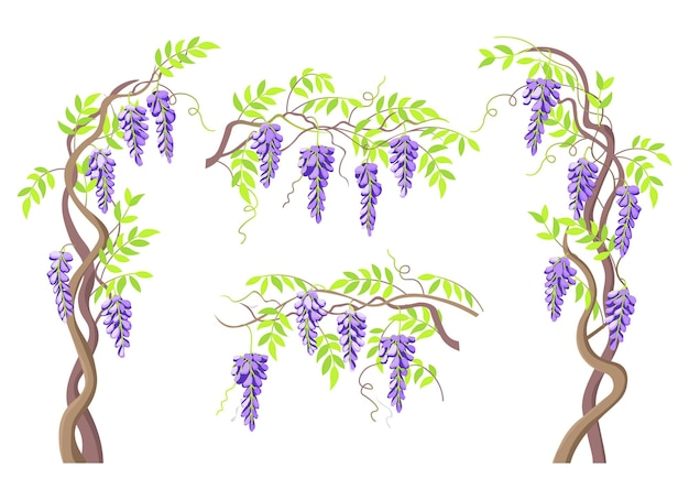 Piołun kwitnące gałęzie glicynii i bukiety kwiatów.