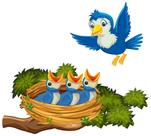 Pisklęta karmienia ptaków